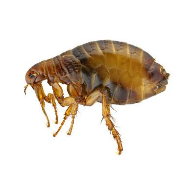 wissenswertes-insekten03