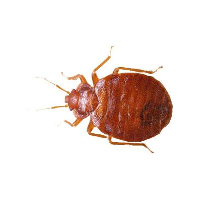 wissenswertes-insekten04