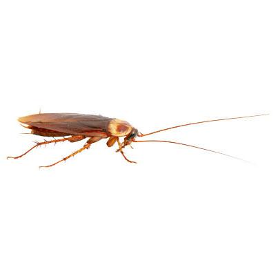 wissenswertes-insekten05