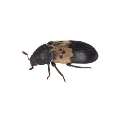 wissenswertes-insekten08