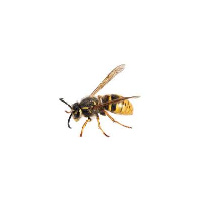 wissenswertes-insekten10