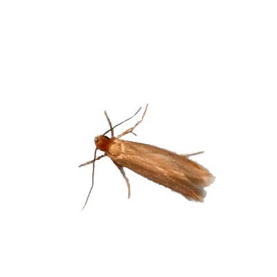 wissenswertes-insekten11