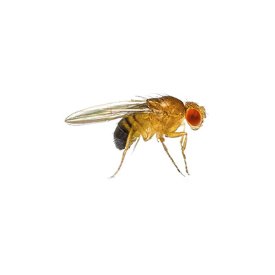 wissenswertes-insekten12