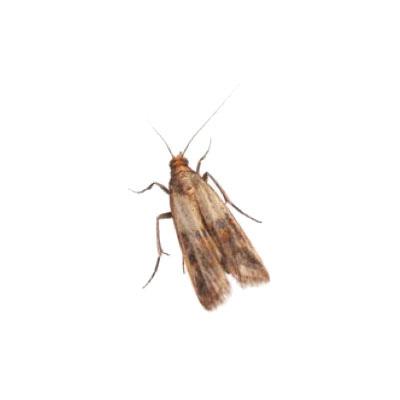 wissenswertes-insekten13