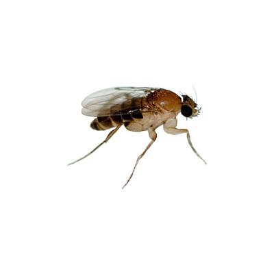wissenswertes-insekten14